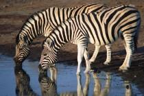 Лучшие зоопарки Европы