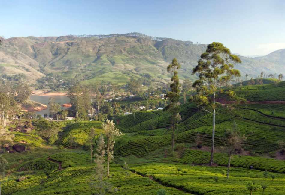 Древний Цейлон — это настоящая экзотика для искушенных
