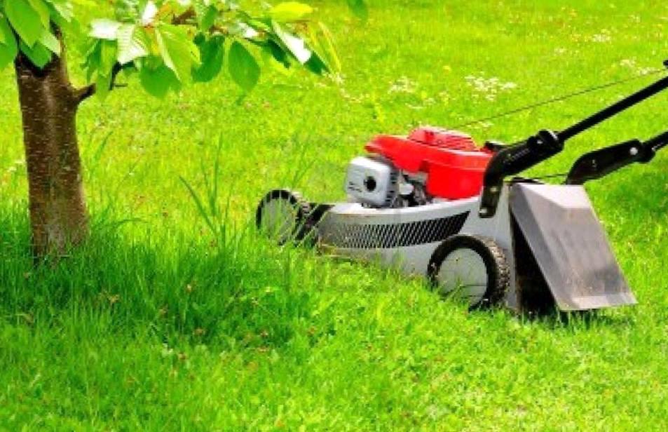Где выбирать садовую технику?