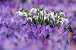 Из каких цветов составляют свадебный букет?