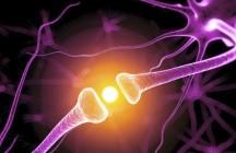 Что такое нейролингвистическое программирование, как это работает, примеры?